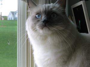 Send Me Cat Pictures!