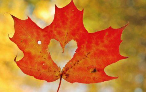 Autumn Haiku Compilation