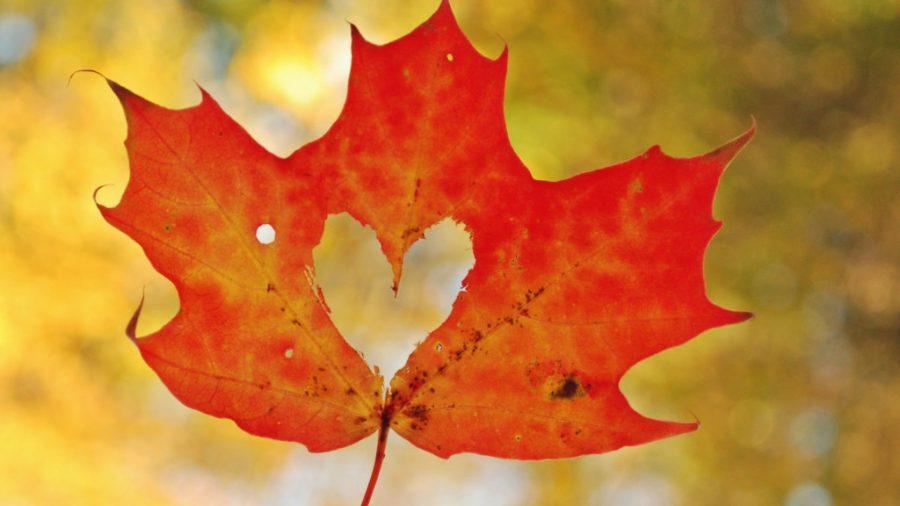 Autumn+Haiku+Compilation