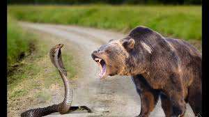 """The Bear and The Snake"" - A Merchant of Venice-Inspired Short Story"